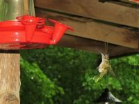 hummers 7-28-2015 088