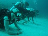 Divers at the Maldives