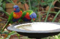 On the Bird Bath.