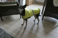 Rainy days and Bambi hates rain... she nows has a raincoat; that helps!!