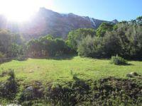 Mountain meadow, Ruby Mountains, Nv.