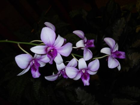 Orchids for you Jigidi