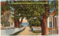 Provincetown Postcard