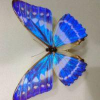 Beautiful Butterfly in a Butterfly Museum