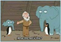 Noah Has a Question