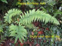 Happy Birthday Ank (puzzeljac)