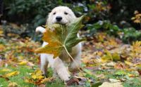 Cute with the leaf in it's mouth