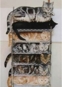 Tower of Cats