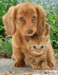red pup and kitten