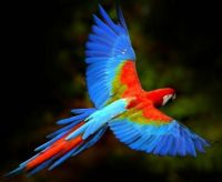 A Flying Paradise of Colors