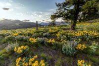 Summer evening flowering mountain meadow landscape