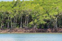 Mangroves in Port Douglas.