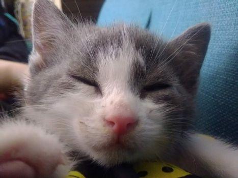 Memories of Kittens