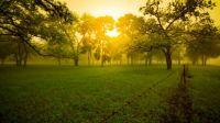 Early Morning Cypress Trees Near Medina, TX