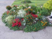 Lovely Summer Garden