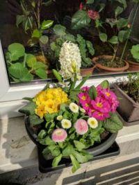 rozkvetlý květináč