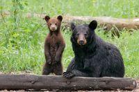 Ma and Cub