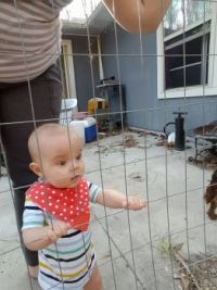 Dylan sees chickens