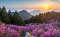 Mountain sunrise over wildflowers & mist