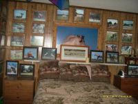 one of my bedroom walls with  CLOUD'S PICTURES  and other horses of the Pryor Mountains