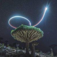 The Island of Socotra of Yemen
