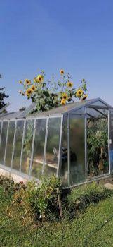 Kvetoucí skleník...