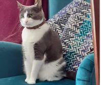 Cass in a Chair