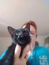 Ninja Sophie Kitten