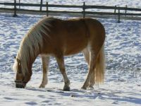 The Horse in the Snow