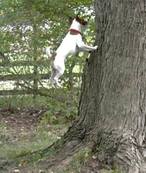 Write a Caption!  dog & tree