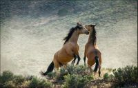 THEME The Majestic Earth:-  Wild Horses