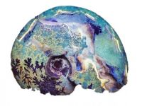 Opal Fossel around 80m years old