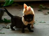 black and gold kittens hugging