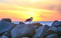 SUN SETTING ON A SEAGULL