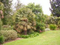 Royal Botanic Gardens3 - Melbourne
