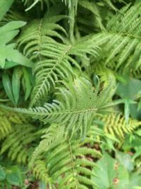 frond on frond--more challenging