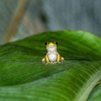 Cutie Aww Frog