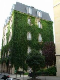 Ivy Covered Building - Paris
