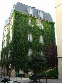 Ivy Covered Building - Paris