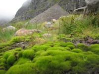 Scottish Highlands Hike--along the trail