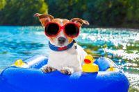 Keeping Cool - Cruising the Lake