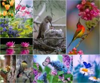 Beautiful birds and butterflies