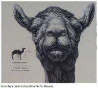 Prehistoric camel.jpg