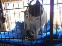 DT in his hammock in the cage he will be in till his eye is healed :(