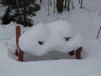 My backyard bench