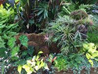 Happy plants in a Botanic Garden greenhouse
