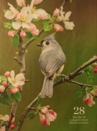 Tufted Titmouse, part II