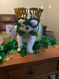 Happy Saint Patrick's Day Jigidi's