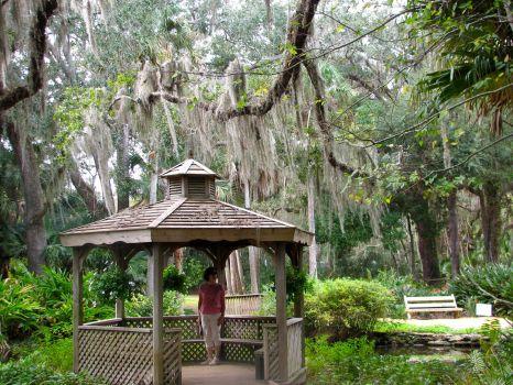 Mantanzas State forest  Fl, -Nov 2010