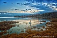 Doug Clement Photography Swan
